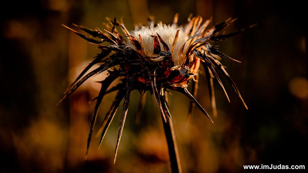 A thorn