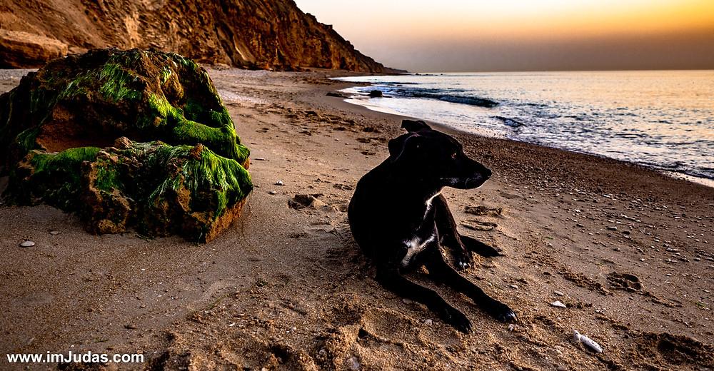 A dog at the beach at sunset
