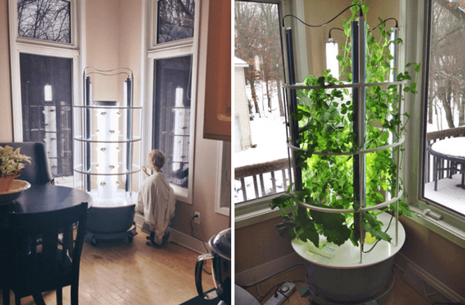 Tower Garden photo.png