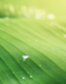 banana-leaf-blur-bright-365638.jpg
