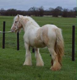 Liza's first foal