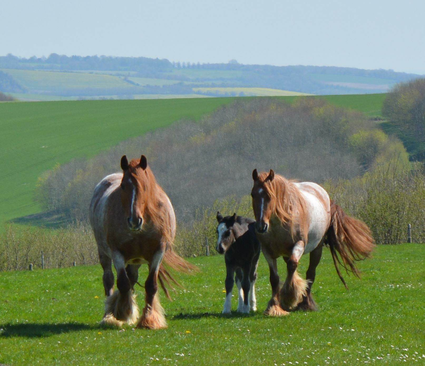 SD Red Mare & SD Red Filly