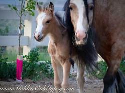 Baby Satine with mum