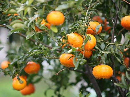 Sermon series: Fruits of the Gospel (1)