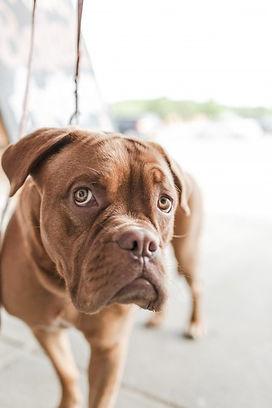 1-animal-dog-pet-cute-2.jpg