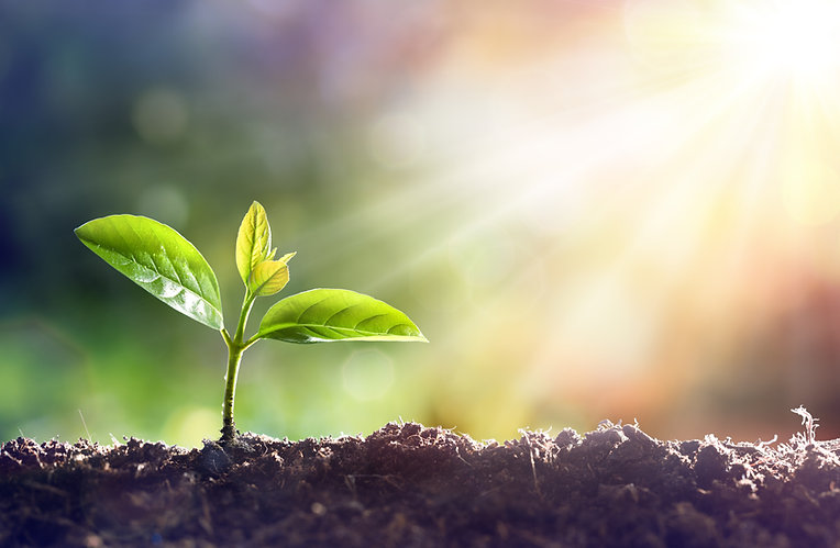 Young Plant Growing In Sunlight.jpg