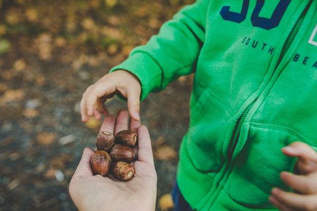 Waldunterricht: Eichen pflanzen