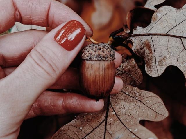 Waldunterricht: Eicheln sammeln