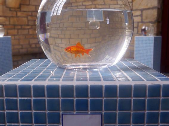 Like goldfishes can swim