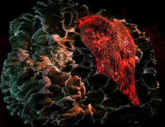 岩熔人体4 LavaBody4.jpg