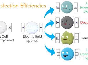 Impedance Spectroscopy_Transfection Effi