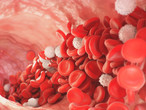 Shear Rate - what's it got to do with platelet adhesion?
