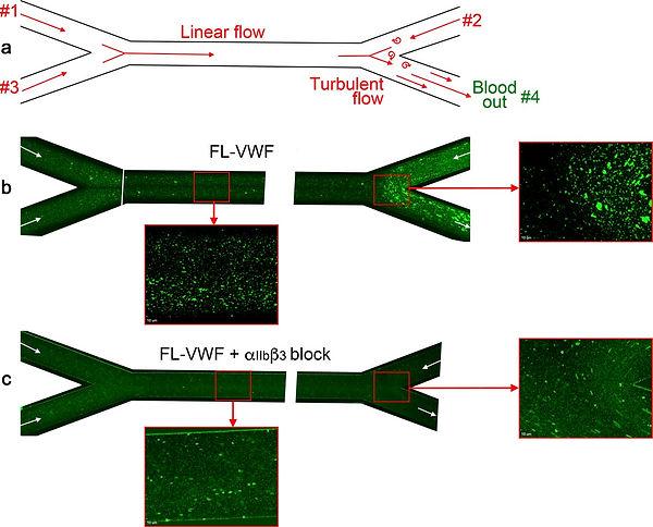 Platelet and leukocyte binding in bifurc