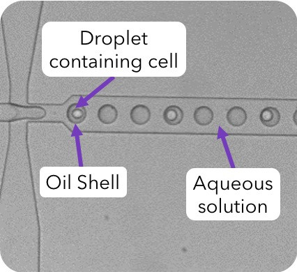 Double-Encapsulation:  Single-cell droplet in oil shell