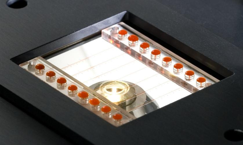 Vena8 Biochip in microscope stage
