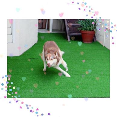 happy tails okinawa