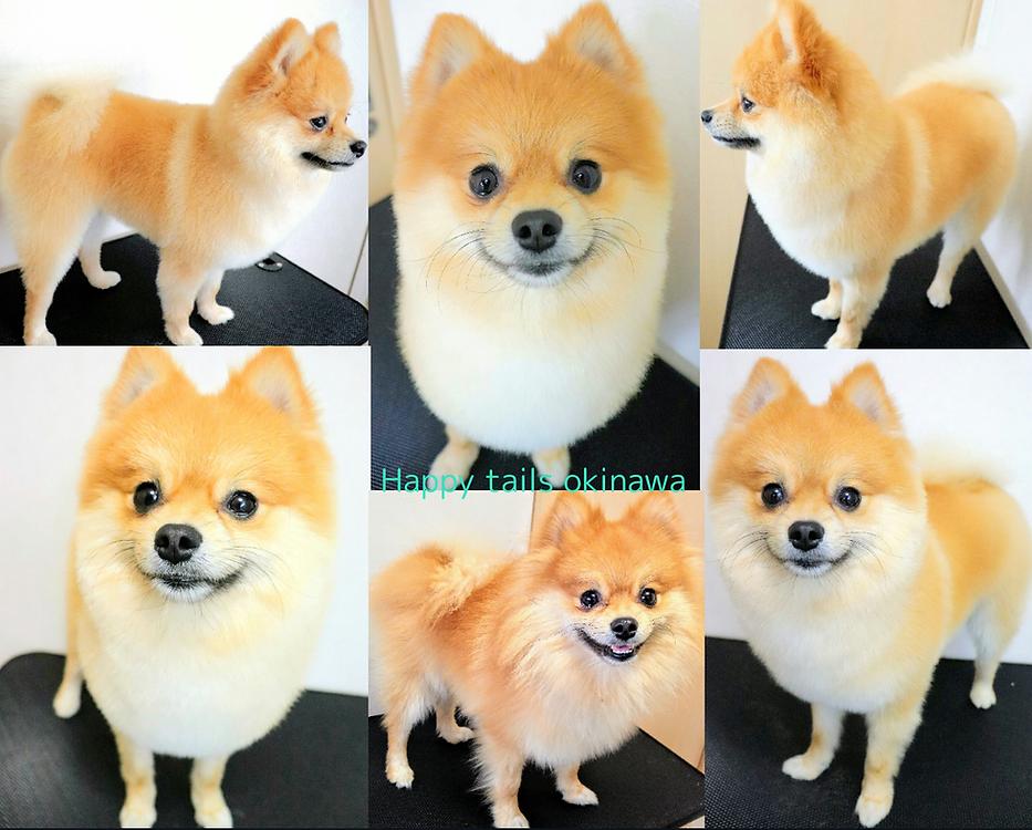 happy tails okinawa grooming