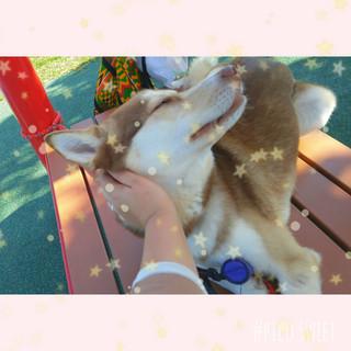Happy tails okinawa dog boarding & groom