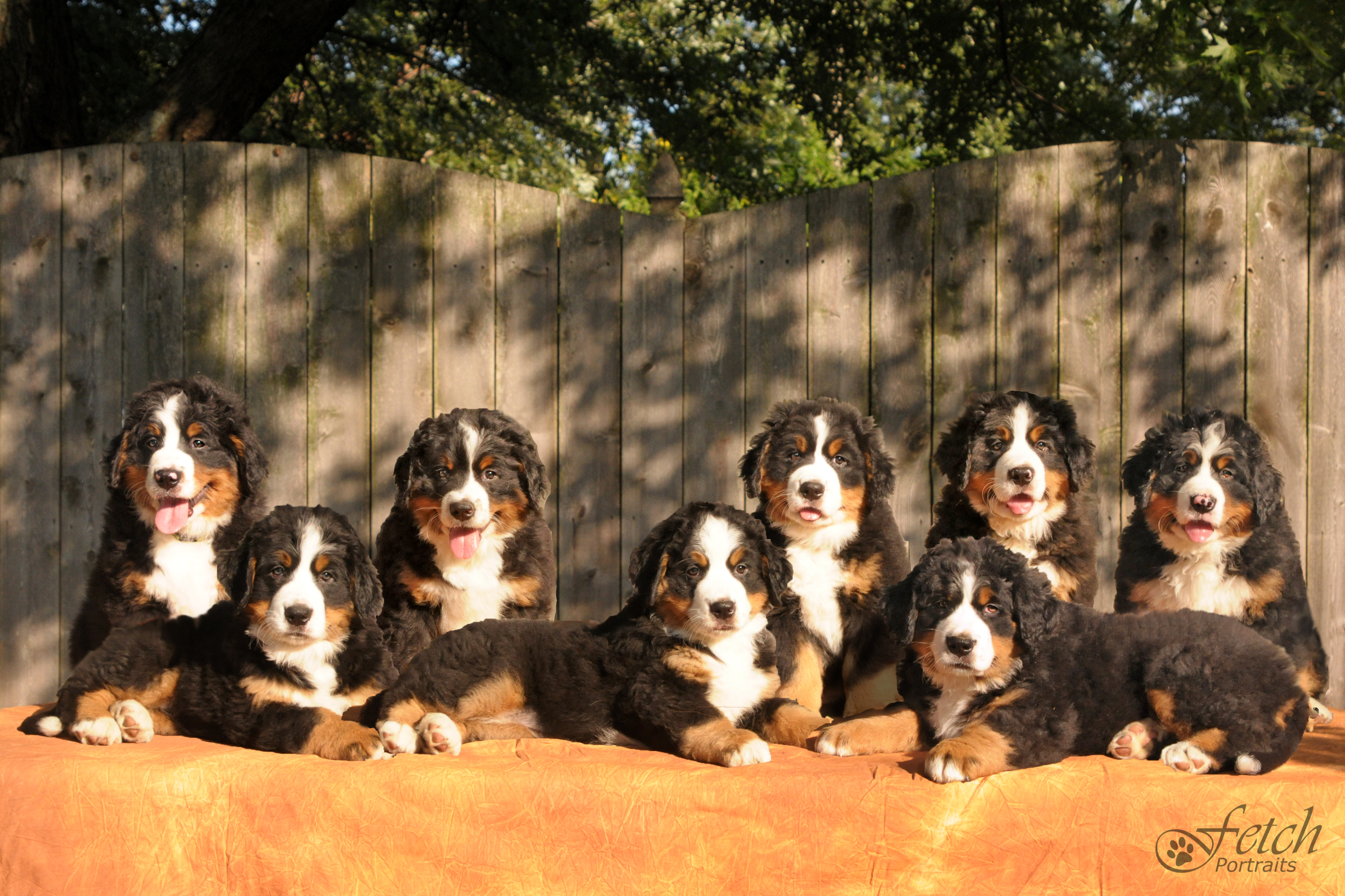 berner_litter_2013_wm