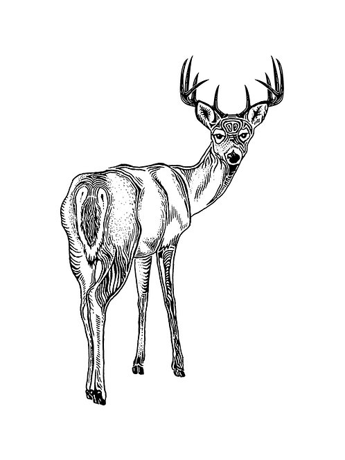 Stag Folding Card(s)