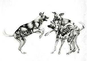 wilddogs008.jpg