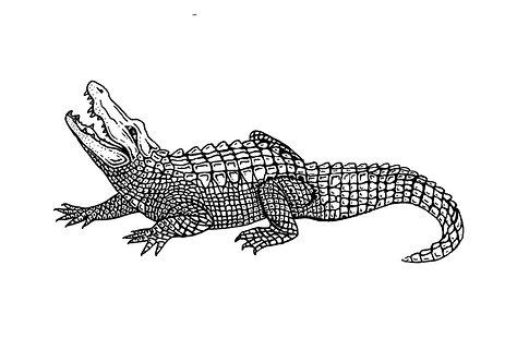 Kids Alligator Super Soft Tri-blend Tee