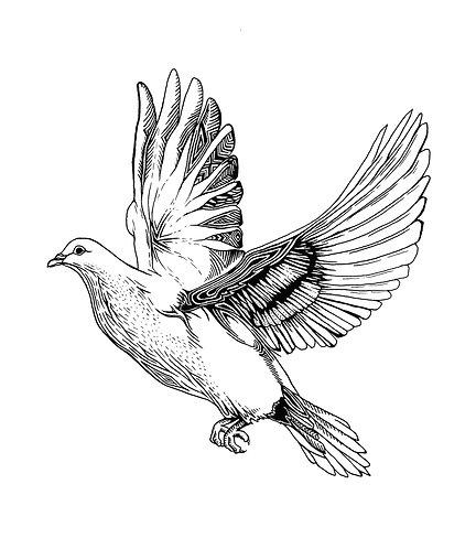 Dove Folding Card(s)
