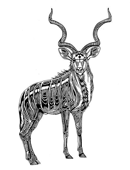 "Kudu Print 11x14"""