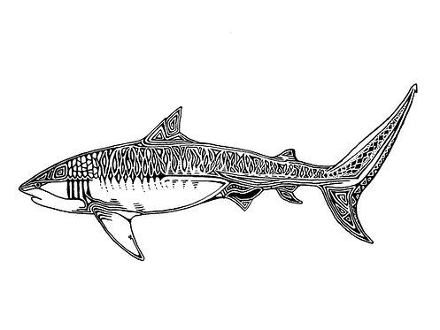 Shark Folding Card(s)