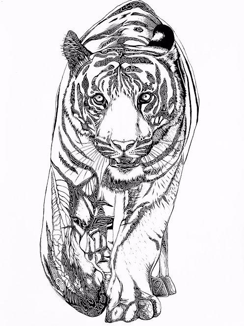 Tiger Folding Card(s)