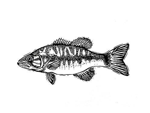 "Shoal Bass Print 11x14"""