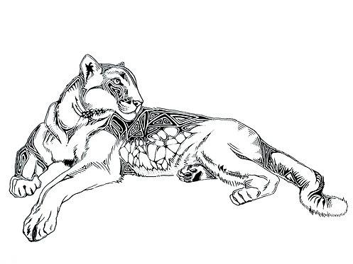 "Mountain Lion Print 11x14"""
