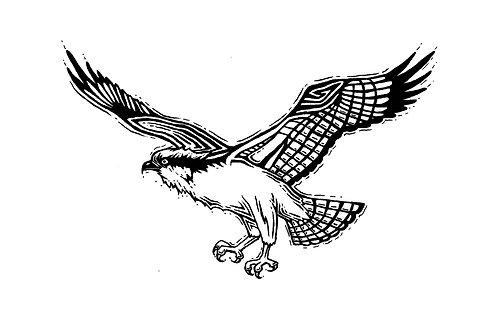 "Osprey Print 11x14"""