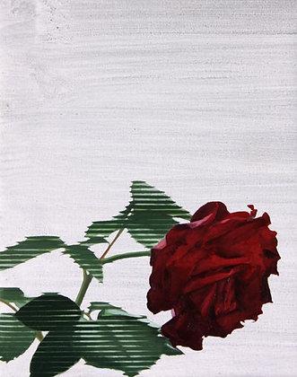 Thomas Leveritt - Rose II