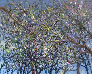 Almond Trees in Springtime