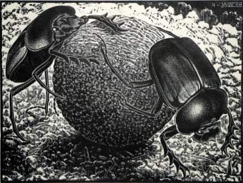 Maurits Cornelis Escher - Scarabs