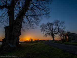 Skyline Ravenswaaij met oude boom
