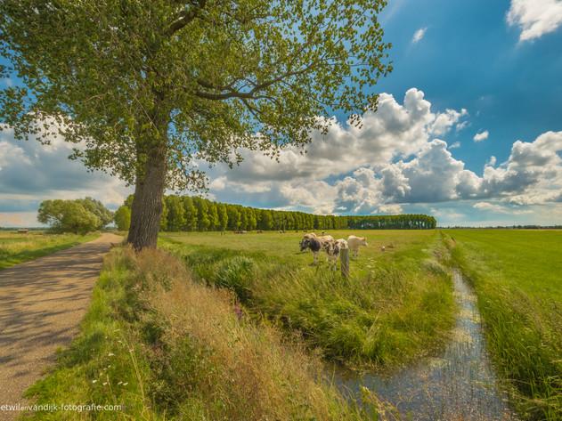 Polderlandschap in de Betuwe