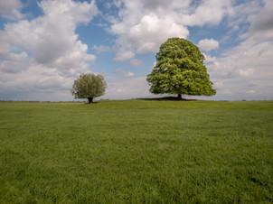 Twee bomen in landschap