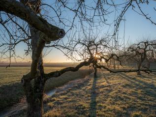 Oude grillige fruitbomen