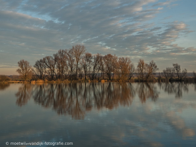 Spiegeling of reflectie bomen in water