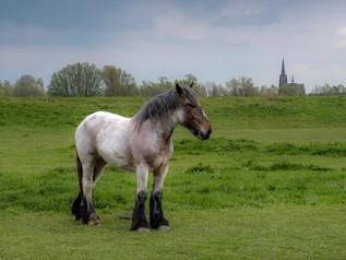 Prachtig paard bij de dijk