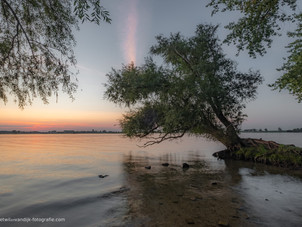 Boomwortels - mangrove
