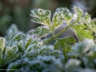 Bevroren groen