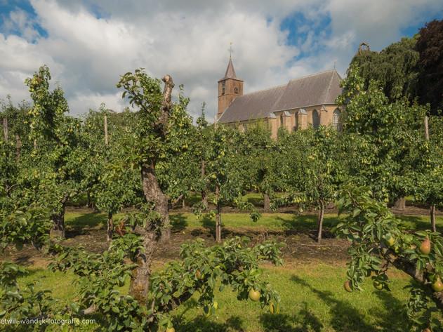 St. Jan de Doper kerk Echteld tussen de fruitbomen