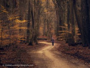 Het pad naar....