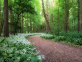 Daslook in bos