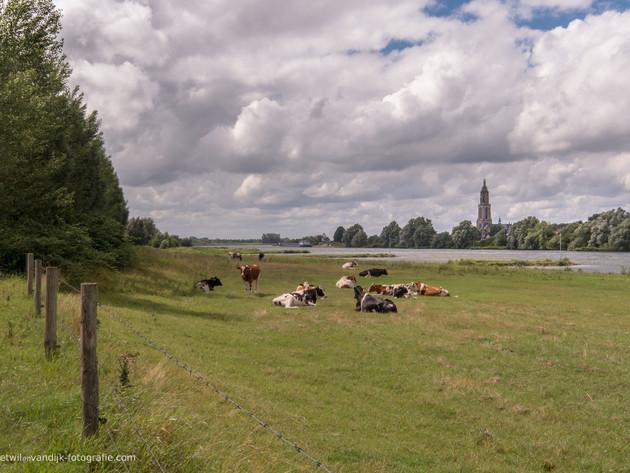 Skyline Rhenen met Cunerakerktoren