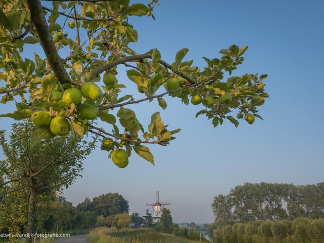 Molen de Vlinder aan de Appeldijk met appelboom