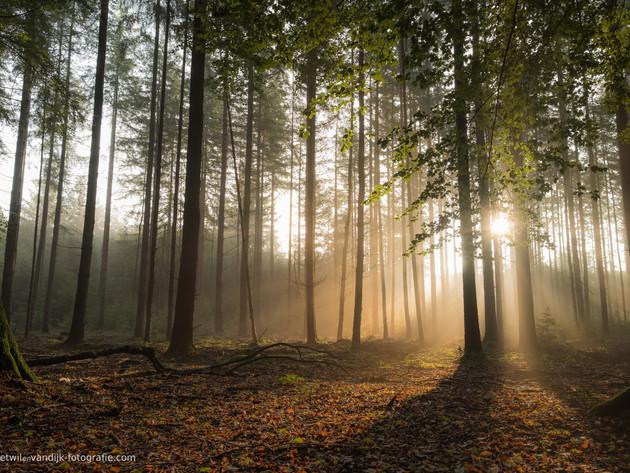 Mystiek bos met zonneharpen